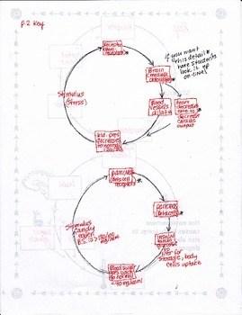 Homeostasis Negative Feedback Loop Tutorial By Biology