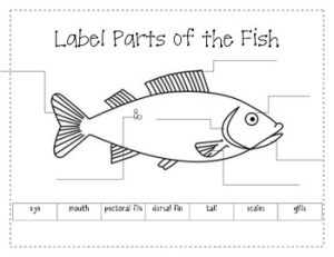 Label the Parts of a Fish by firstgradeannie | Teachers