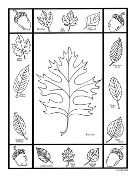 Leaf Coloring Pages By Hey That S My Art Teacher Tpt