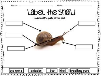 Let S Label The Creatures Worm Snail Fish Labeling Unit