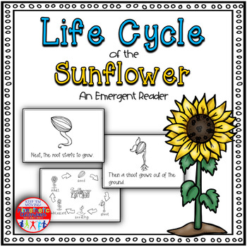 Life Cycle Of The Sunflower Science Reader By Kinesthetic Classroom