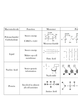 Macromolecule Chart Biomolecules By Mr Affro