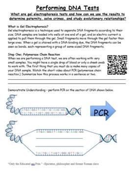 Pcr Gel Electrophoresis Practice Worksheet By Grace