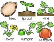 Image result for life cycle of a pumpkin