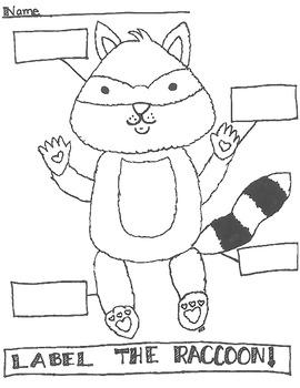 Raccoon Labeling Worksheet By Kim Smittle