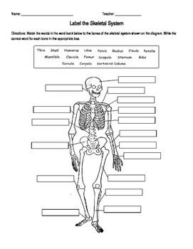 Skeletal System Labeling by Amanda Behen | Teachers Pay Teachers