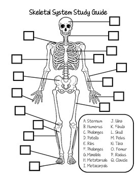 Skeletal System Study Guide by Fantastic in 4th   TpT