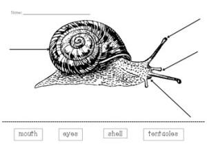 Snail Diagram by Mary Claire Hackett   Teachers Pay Teachers