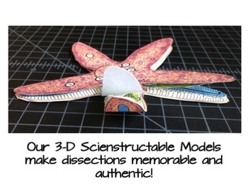 Starfish Paper Dissection