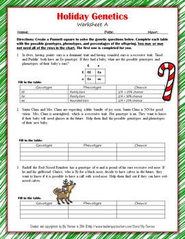 Winter Holiday Genotype And Phenotype Punnett Square