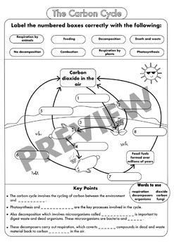 High School Biology Worksheets And Posters On The Carbon Cycle