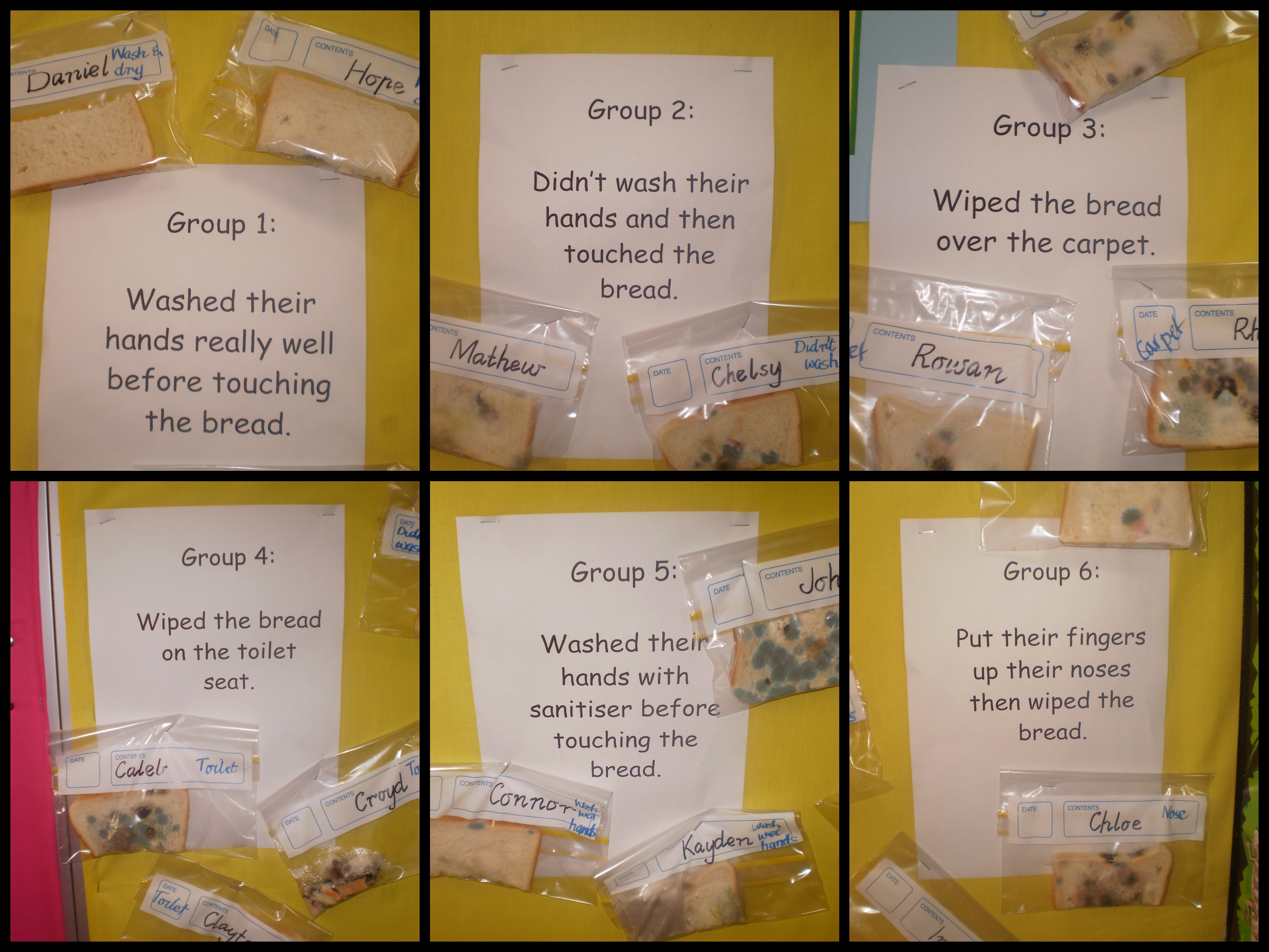 Our Experiment On Germs