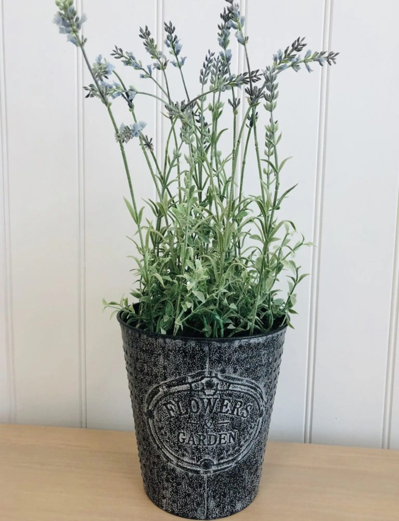 Lavender pot -Flower garden