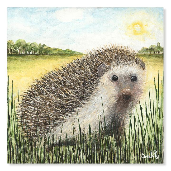 Sunshine by Sarah Pye, a hedgehog amongst grass in the countryside in blazing sunshine