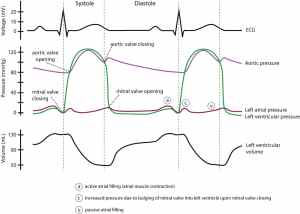 Figure 4 Wiggers diagram – ECG learning