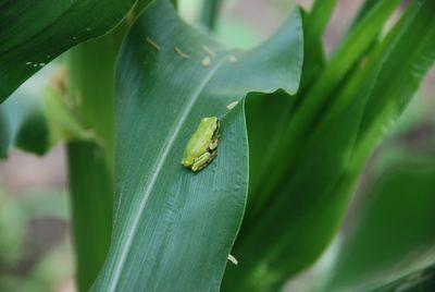 2012-07-04 toumorokosi7