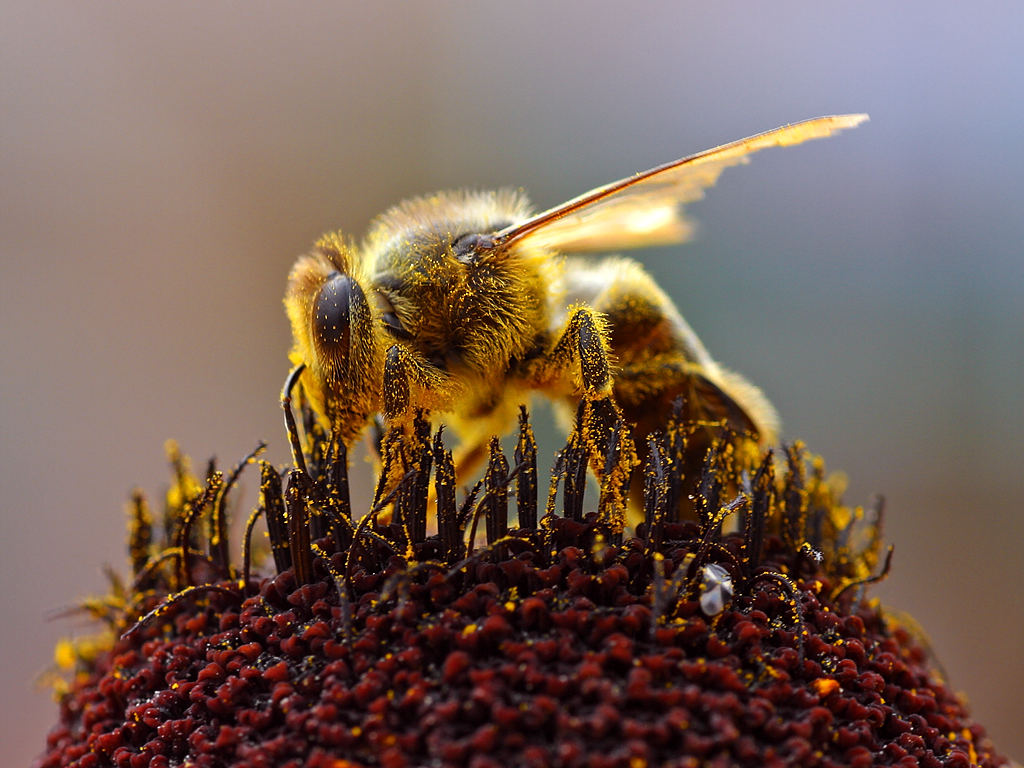 Image result for bee phenology