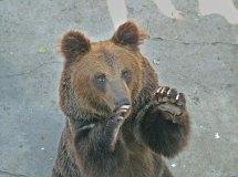 zoo_w_pekinie_14