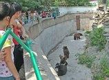 zoo_w_pekinie_15
