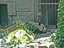 zoo_w_pekinie_6
