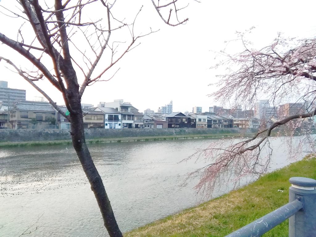 季節を感じる 京都 春鴨川