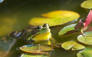 Frog by Henry McLin