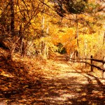 A trail in Fall