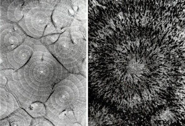 09dictyostelium_cells