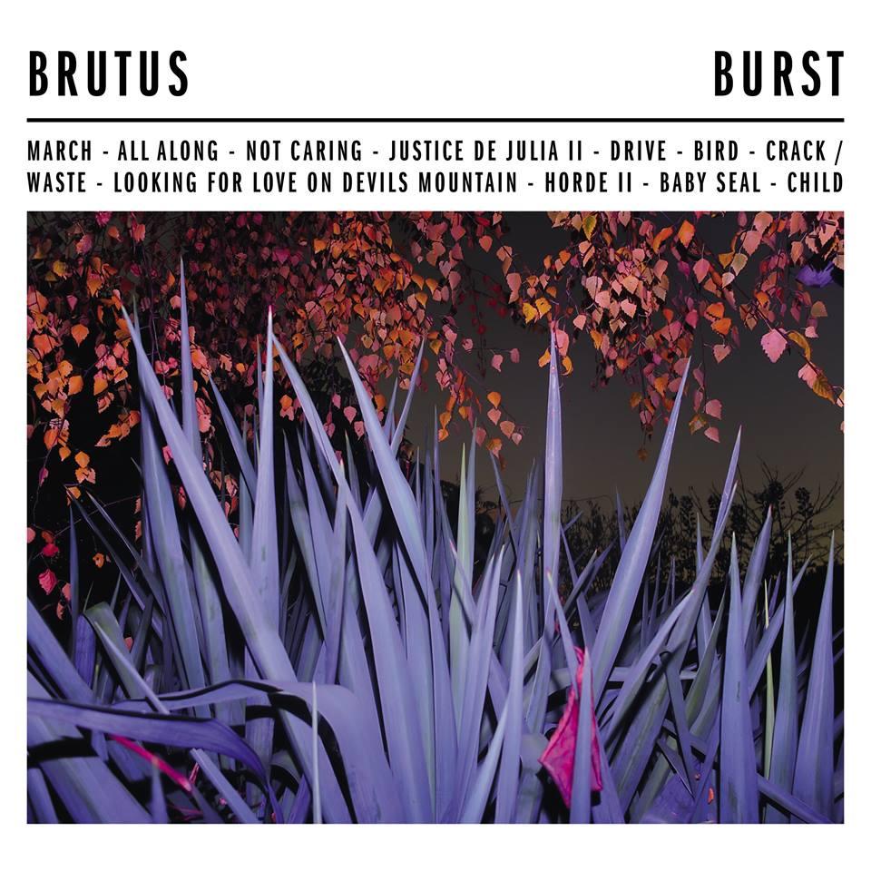Image result for burst brutus