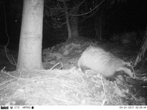 Badger exclusion 2 e1518020184323