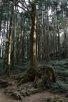 奇型怪狀的樹幹