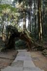 根據旅館老闆,這裏名為永結同心,因為是兩株樹木合二為一出來的樹洞