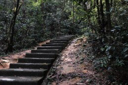 從紅梅谷燒烤場的起點開始就是樓梯了