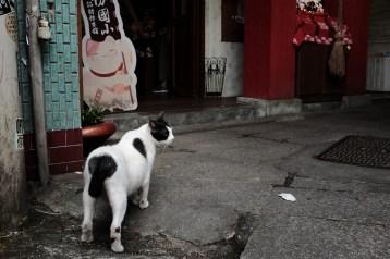 沿途遇上貓,附近也有以貓作主題的精品店