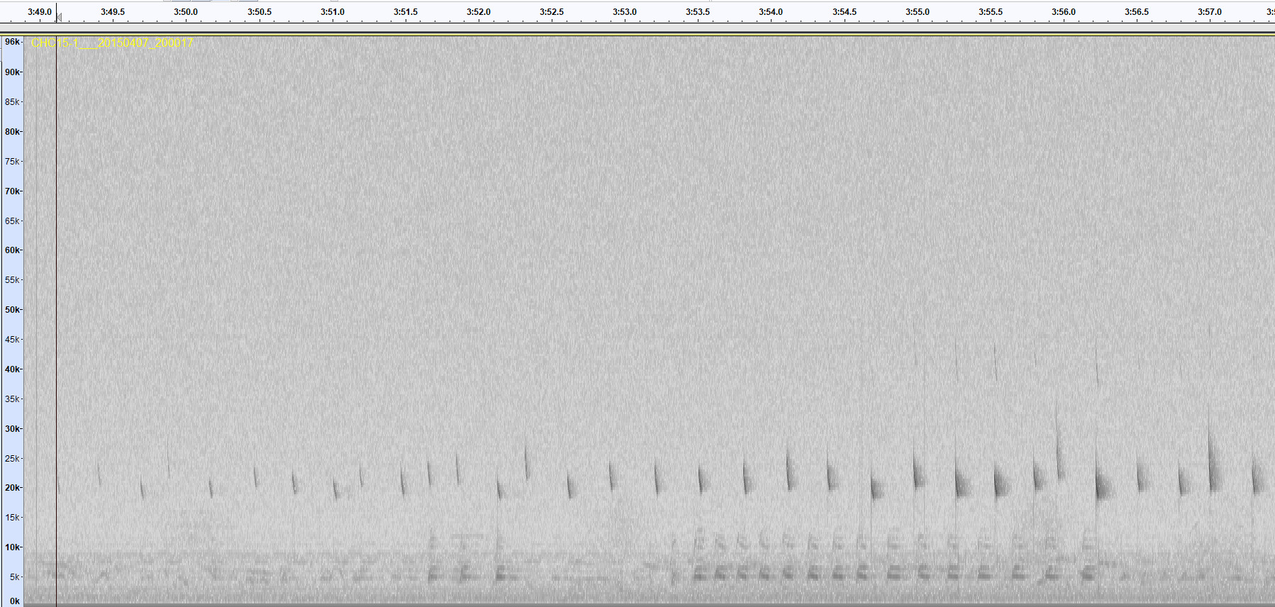 Bat Calls And Their Variations