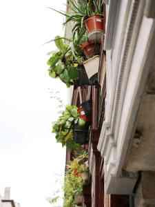 accrocher des pots au balcon, rebord de fenêtre dans les rues de lyon, le quartier des pentes