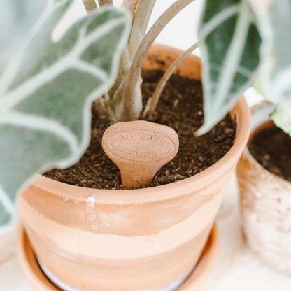 etiquette en terre cuite planter de la terre, alocasia dans un pot en terre cuite
