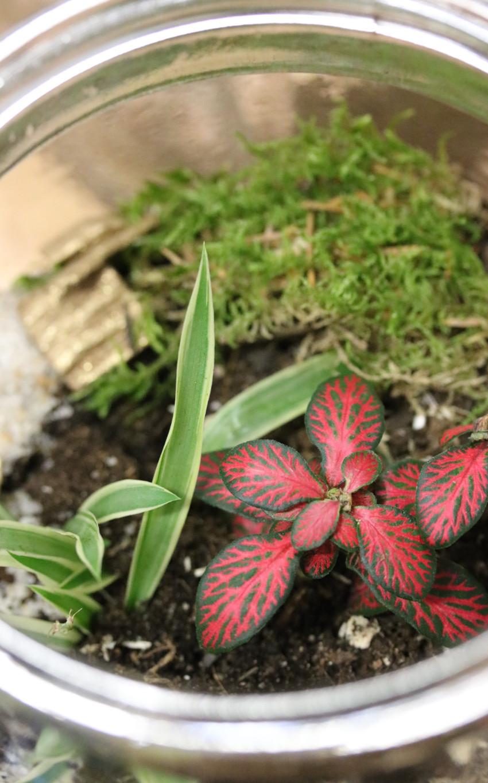 plantes dépolluantes au bureau, atelier jardinage team buiding paris, tarif