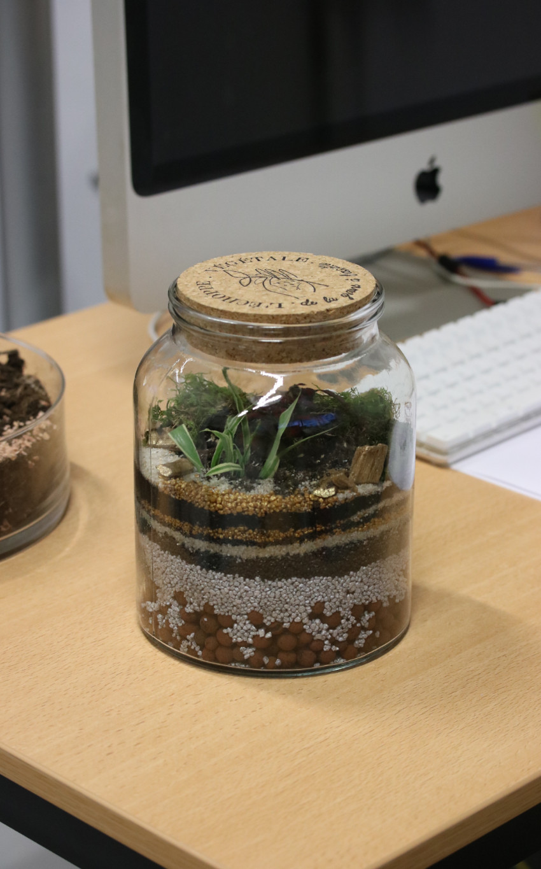 animation terrarium, végétalisation bureau entreprise, décoration, budget et tarif