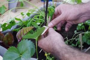 homme jardinage sur balcon, main dans la terre