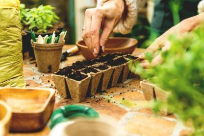 semis au potager lombricompost, terreau bio semis
