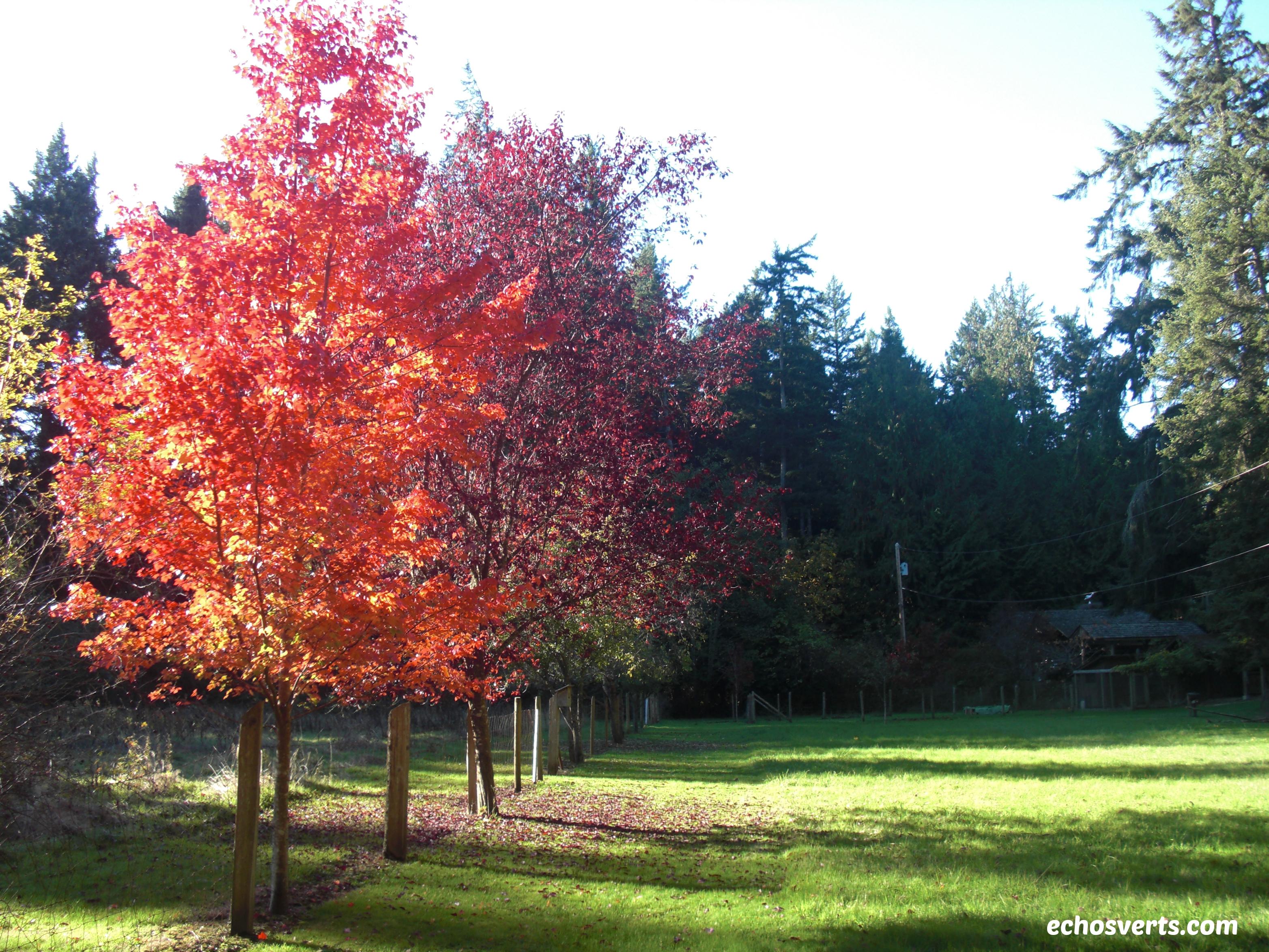 Fall- Vancouver Island- copyright- échos verts