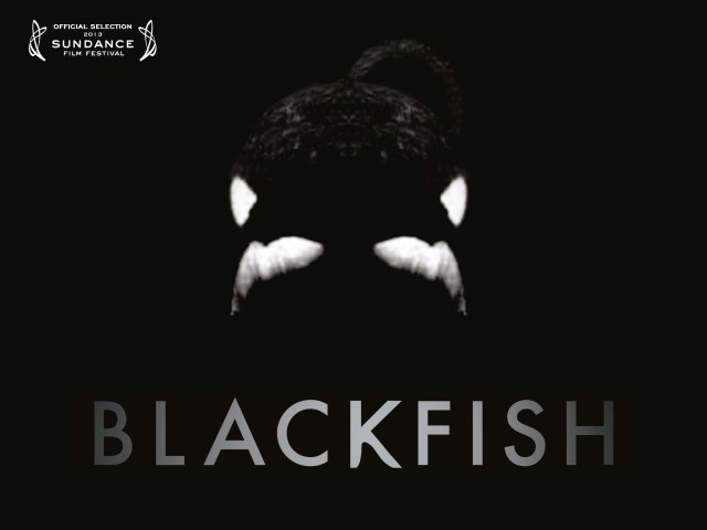 Affiche Blackfish l'orque tueuse