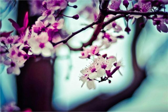 nature-flowers-plant-blur-large