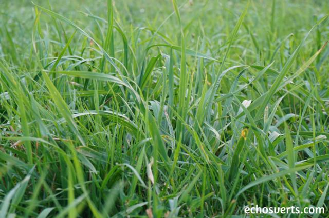S'allonger sur l'herbe echosverts.com