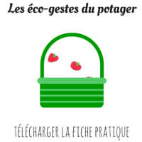 Eco-gestes potager