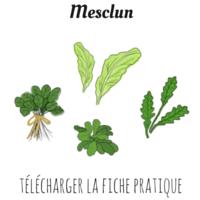 Mesclun