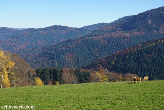 Freiburg forêt noire echosverts.com