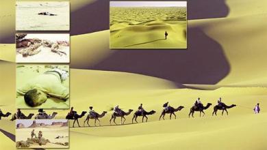 """صورة صحراء """"تينيري"""" ..صحراء التيه والموت بين الجزائر والنيجر ..ميئات الموتى وآلاف المفقودين"""