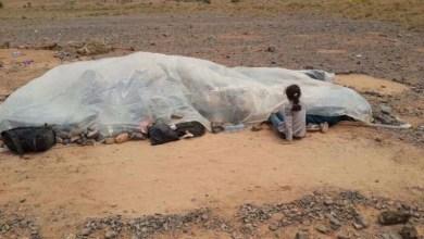 صورة الجزائر تستقبل سوريين من بينهم امرأة حامل وأطفال ألقت بهم المغرب في منطقة فكيك منذ 17 أبريل الماضي